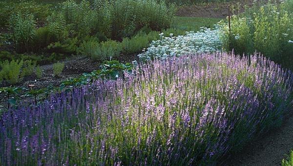 Banner-Small-Natrue-Garden