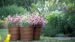 Dr.Hauschka Herb garden