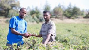 Dr.Hauschka Cultivation partnerships worldwide